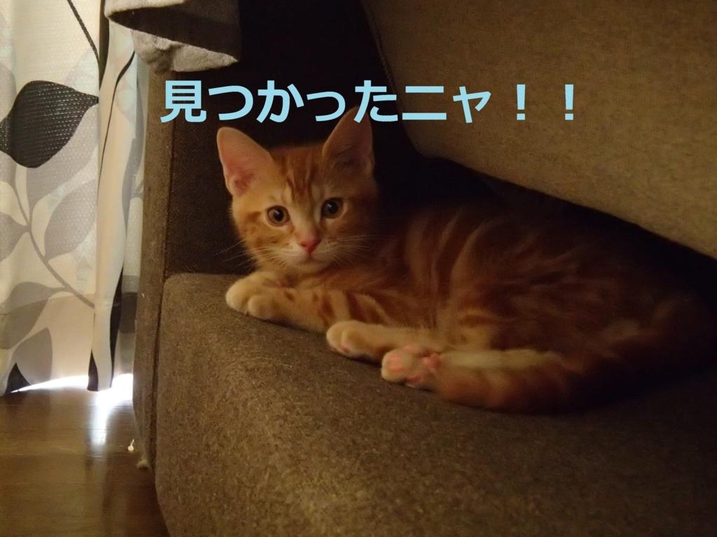 f:id:yatosyouta:20170910173254j:plain