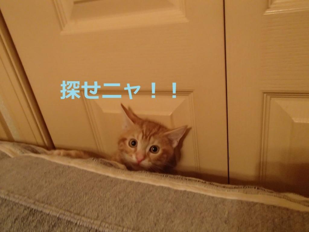 f:id:yatosyouta:20170910174151j:plain