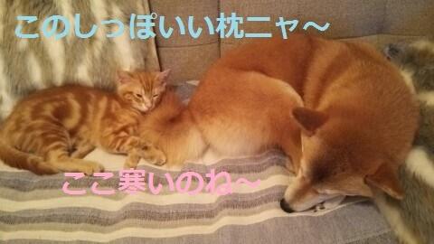 f:id:yatosyouta:20170913133824p:plain