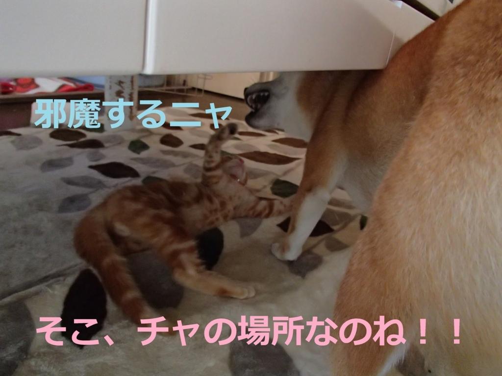 f:id:yatosyouta:20170913134153j:plain