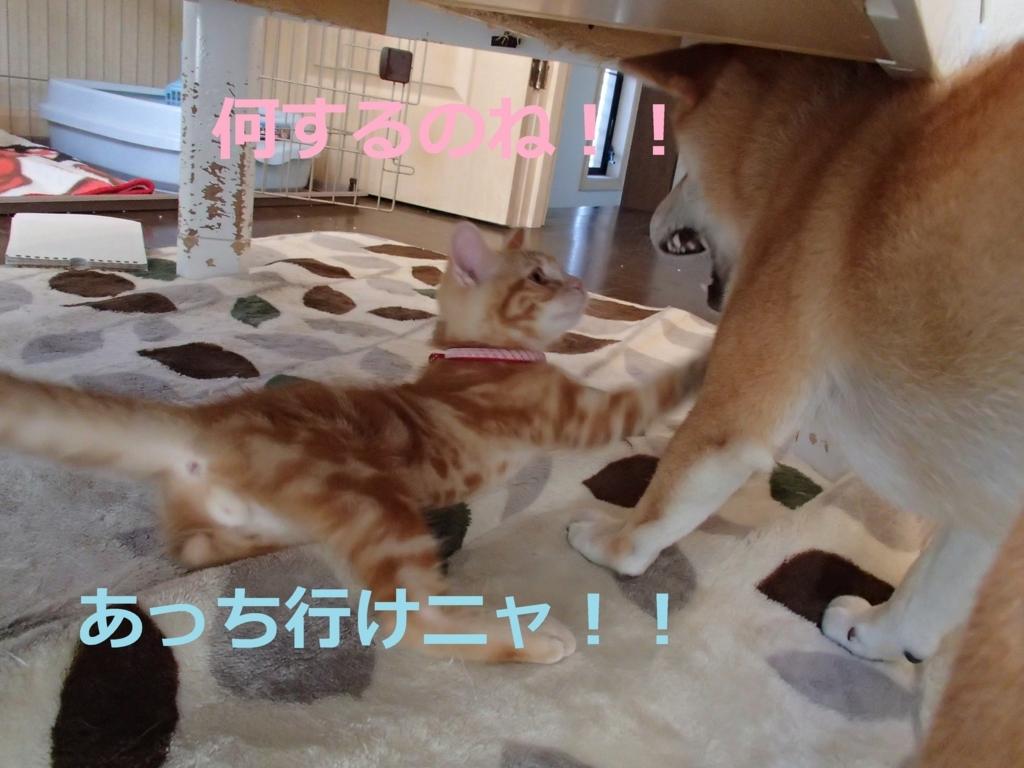 f:id:yatosyouta:20170913134219j:plain