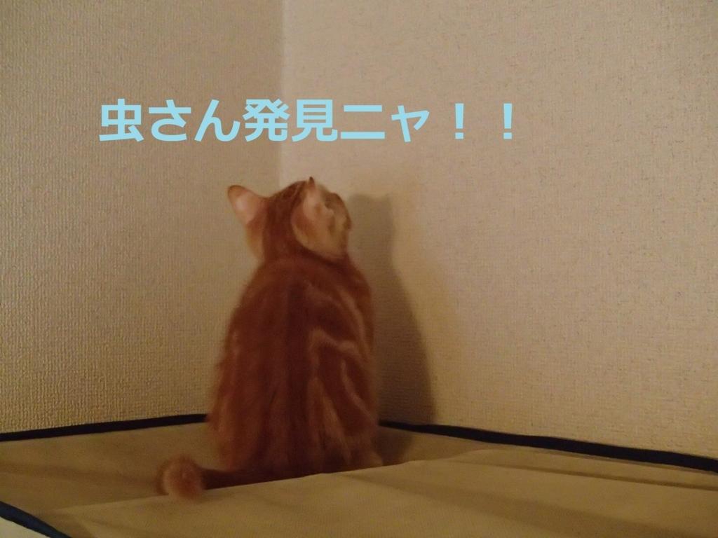 f:id:yatosyouta:20170917114620j:plain