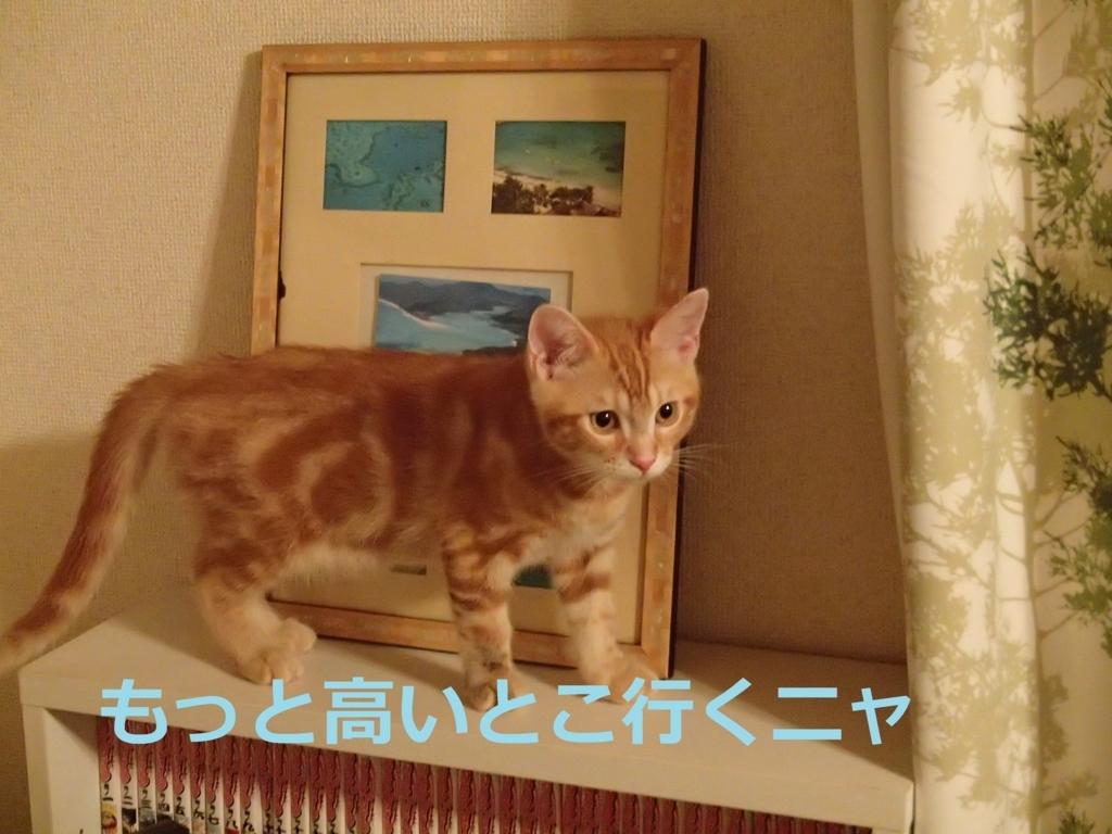 f:id:yatosyouta:20170917114708j:plain