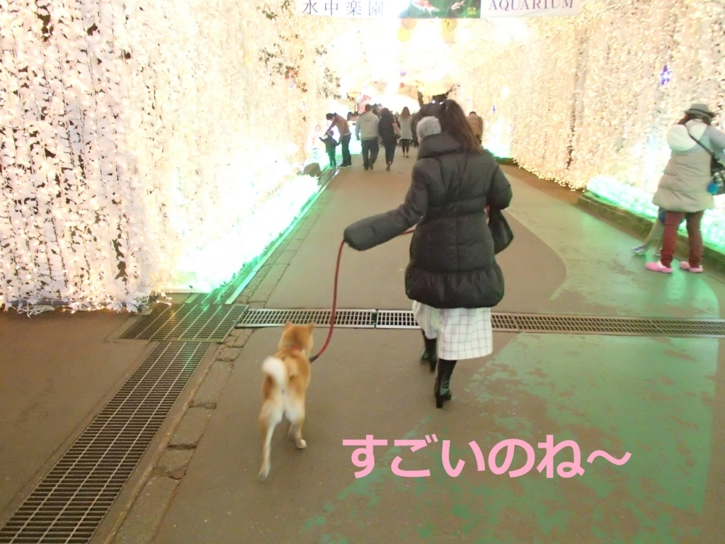 f:id:yatosyouta:20170917193701j:plain