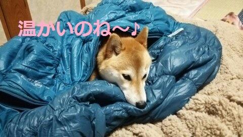 f:id:yatosyouta:20170918230104j:plain