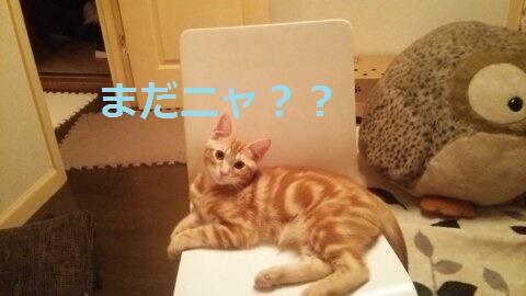f:id:yatosyouta:20170918230141j:plain