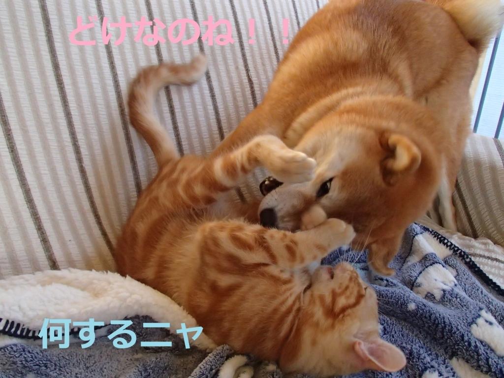 f:id:yatosyouta:20170919142740j:plain