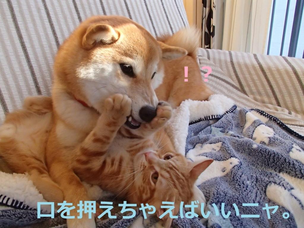 f:id:yatosyouta:20170919143010j:plain