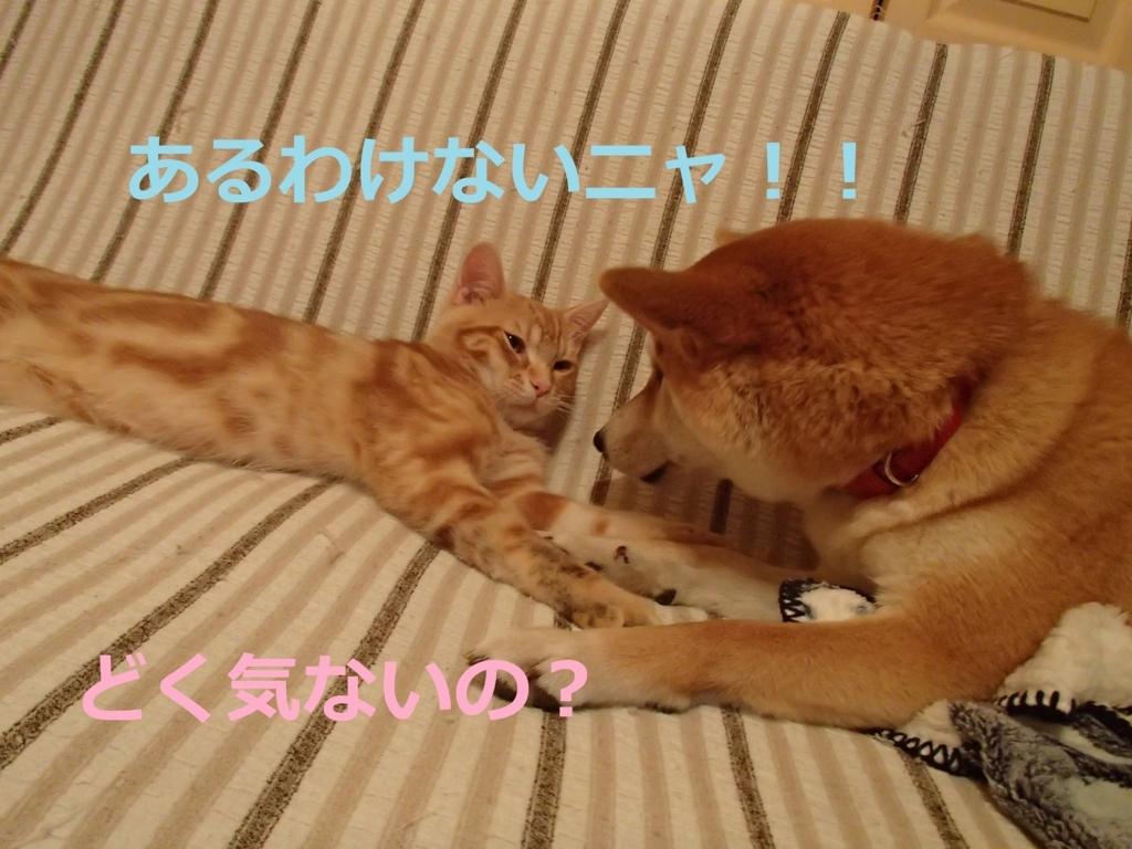 f:id:yatosyouta:20170919143042j:plain