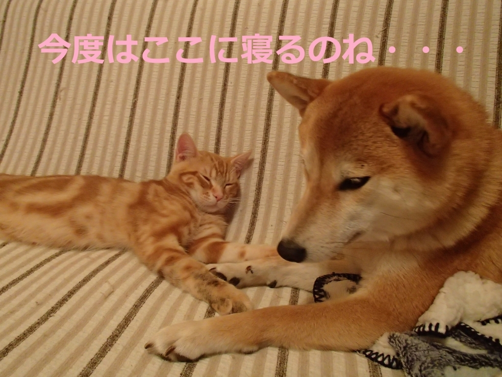 f:id:yatosyouta:20170919143056j:plain