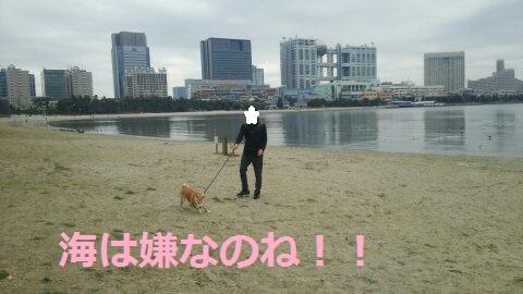 f:id:yatosyouta:20170919205526j:plain