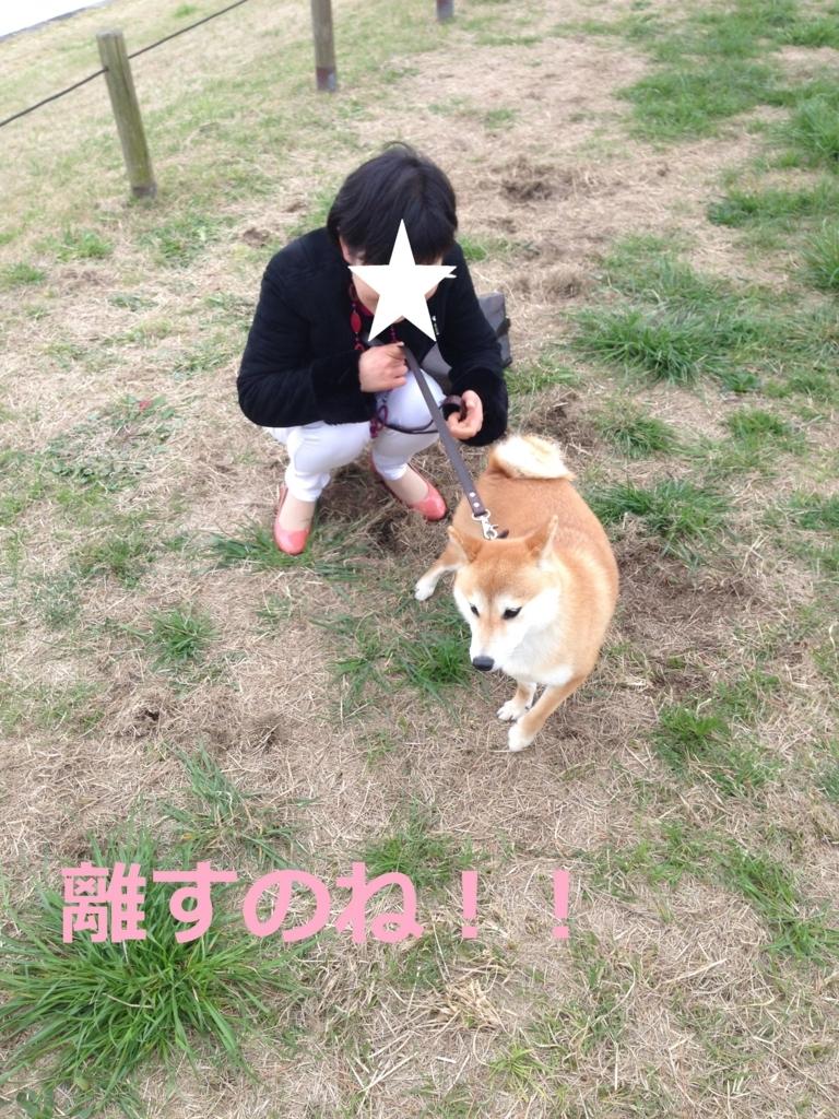 f:id:yatosyouta:20170919205741j:plain
