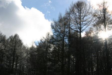 三才山トンネルを出て、カラマツの樹間に冬の日が…