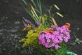 [採ってきた「盆花」(]