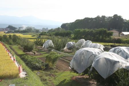 f:id:yatsugatake:20080911155046j:image