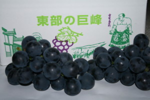 f:id:yatsugatake:20080920155844j:image:left