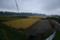 雨降りで、稲刈り中断の田んぼ(20.9.29)