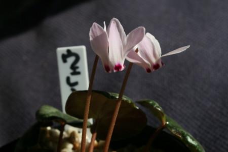 f:id:yatsugatake:20090204101521j:image