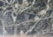 ウメモドキの枝に「スズメ(雀)」の群れ。(21.12.30)