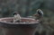 スズメが仲良く、餌台に…。(21.12.30)