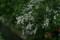 用水脇の花々。(22.5.19)