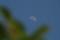 「四月九日」(上弦)のお月さま。(22.5.21)(15:32)