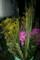 「自前の盆花」(22.8.12)