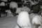 昨夜の積雪状態。(23.2.11)