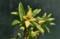 「ナツボウズ(夏坊主)」の花。(23.2.13)