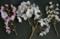 桜、いろいろ。(23.4.24)