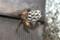 随分と小型の蜂の巣。(23.5.27)