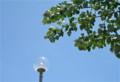 青空に映える「ギンドロ」の葉。(23.6.14)