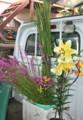 軽トラに積んで、「盆花」の交換。(23.8.13)