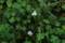 「オモダカ」や「ミズオオバコ」の花。(23・9.2)