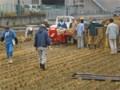 「国際支援米」の脱穀作業。(23.11.5)