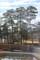 雨上がりの「赤松」。(駒場公園)(24.2.23)