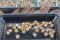 水に浸した「ツタンカーメンの豌豆」種子。(