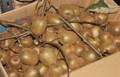 キウイフルーツ・ヘイワード種。(24.11.4)