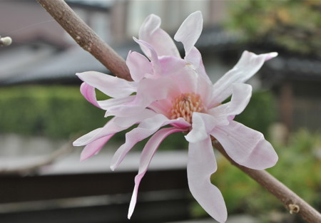 f:id:yatsugatake:20130406063306j:image:right