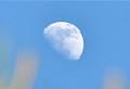 「卯月十一日」のお月さま。(25.5.20)(17:34)