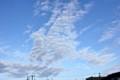 青空に広がる鰯雲。(25.8.28)(6:21)
