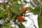 「梶」の木の実。(25.10.10)