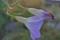 開花を邪魔されている蕾。(25.11.1)