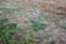降霜で、真っ白な野草。(25.11.2)(6: