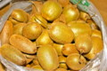 収穫した「キウイフルーツ」。(25.11.14)