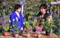 NHK趣味の園芸・エリカ(25.12.8)