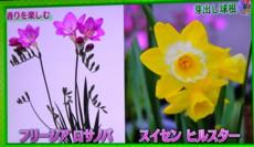 f:id:yatsugatake:20140209084549j:image