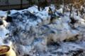 籾殻燻炭の融雪効果。(26.3.3)