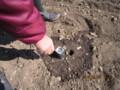植栽地・土壌の酸性度・pH調査。(26.3.23)