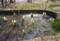 西日を受けて、幻想的な水芭蕉の池。(26.4.2)